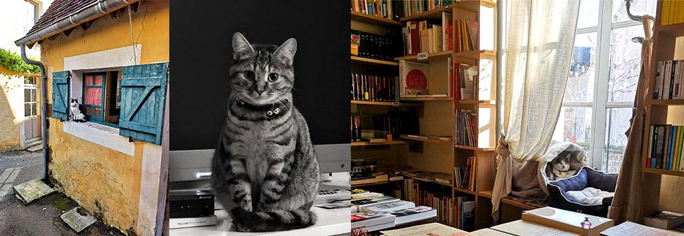 La Librairie aux chats à La Perrière
